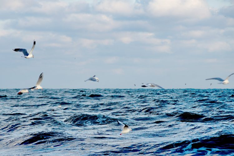 De Noordzee raakt vol